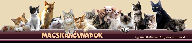 http://www.macskanevnap.hu/images/head.jpg